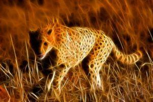 safaritur til afrika