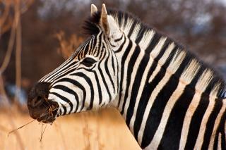safari tur