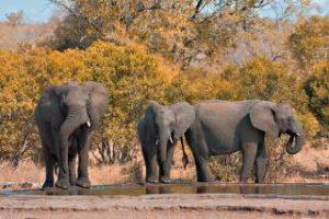 Safari-tur-elefanter