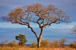safari tur afrika